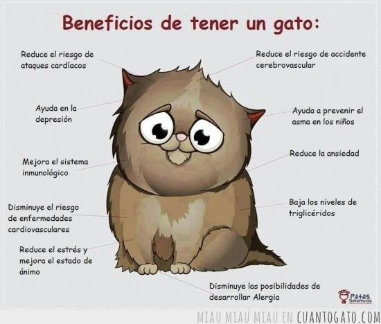 CG_26668_por_eso_y_muchas_cosas_mas_tengo_gatos