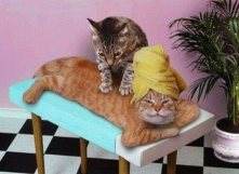 Natural_Healing_Cats
