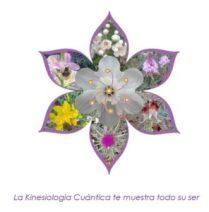 flor-de-flores-1-296x300